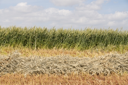 To cut down on financial losses, proper hay storage is critical.