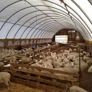 fabric structure for sheep housing