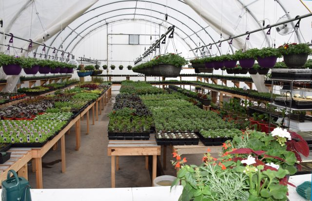 Winkler Structures greenhouse